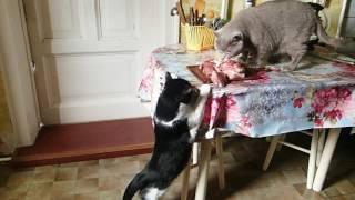 Коты и мясо