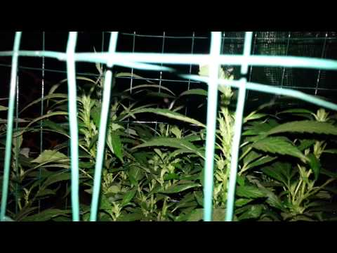 Late night watering extra 2015
