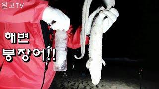 156회 강릉 양양속초 동해 해변 붕장어 원투낚시 마릿…
