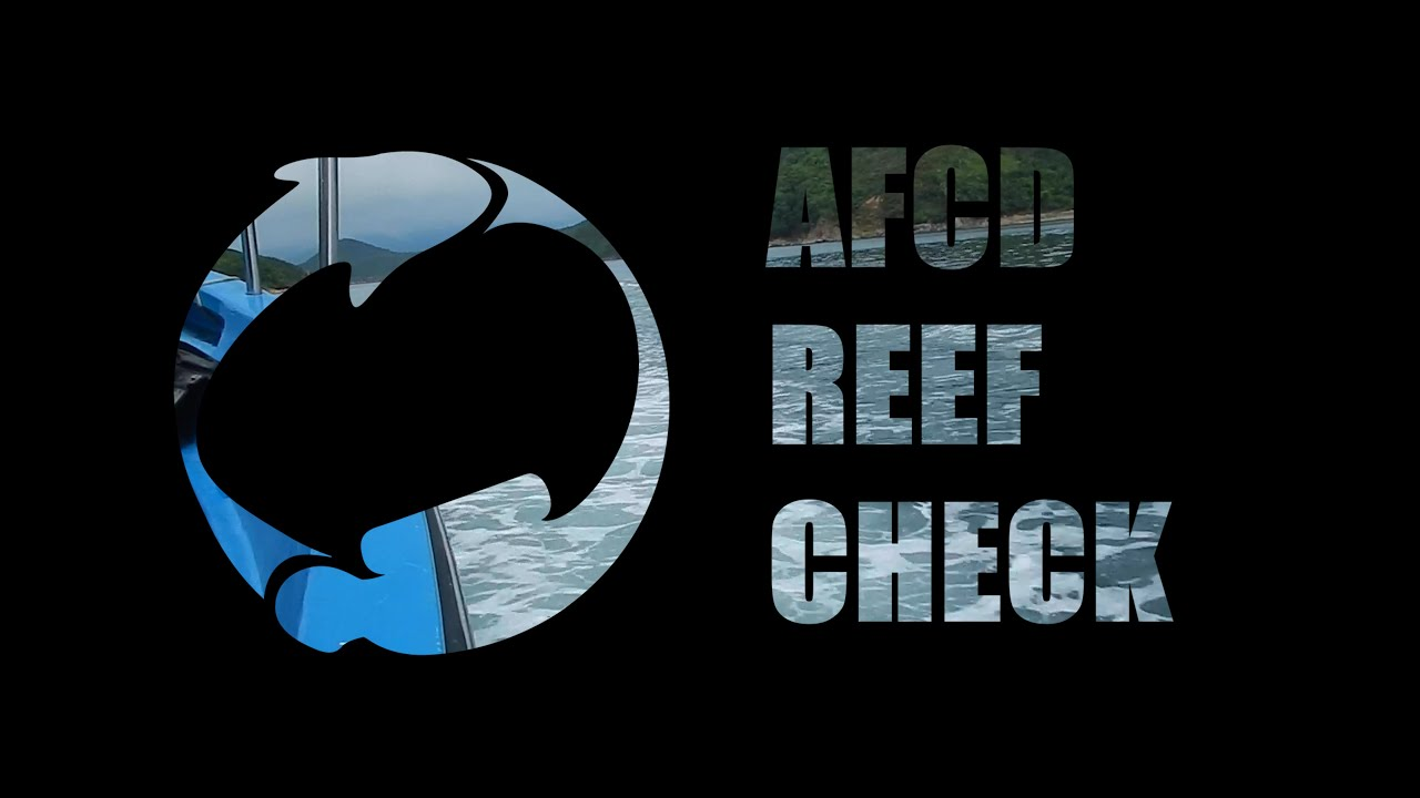 AFCD Reef Check by SCDC - August 2019