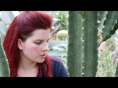 Elisa Biondi, horticulturist in Kew Gardens' Princess of Wales Conservatory, Londoner #82