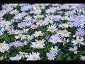 徳永英明 - 恋におちて-Fall in love-(カラオケ)