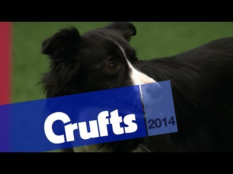 Agility | Crufts Singles | Final Round | Small, Medium, Large Agility | Crufts 2014