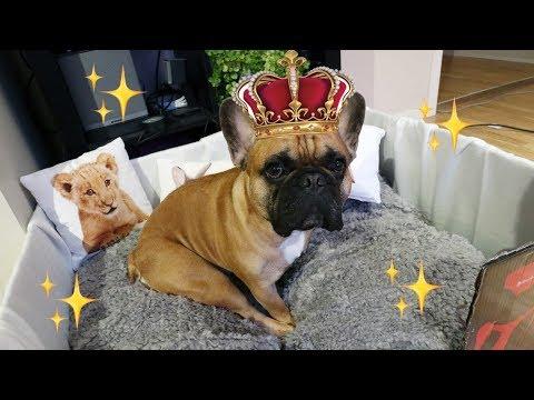 PUPPY PALACE vol.2 - DIY Dog Bed