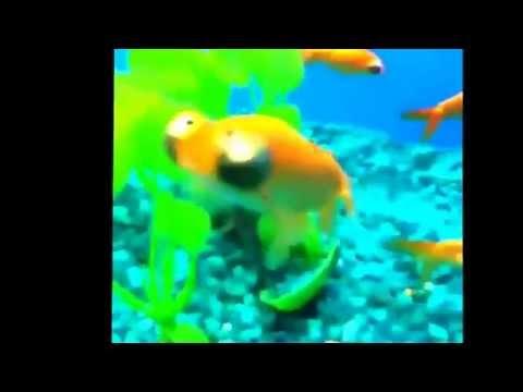 Funny Fish Vine