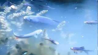Пруд своими руками - рыбная ферма | Gersimon.