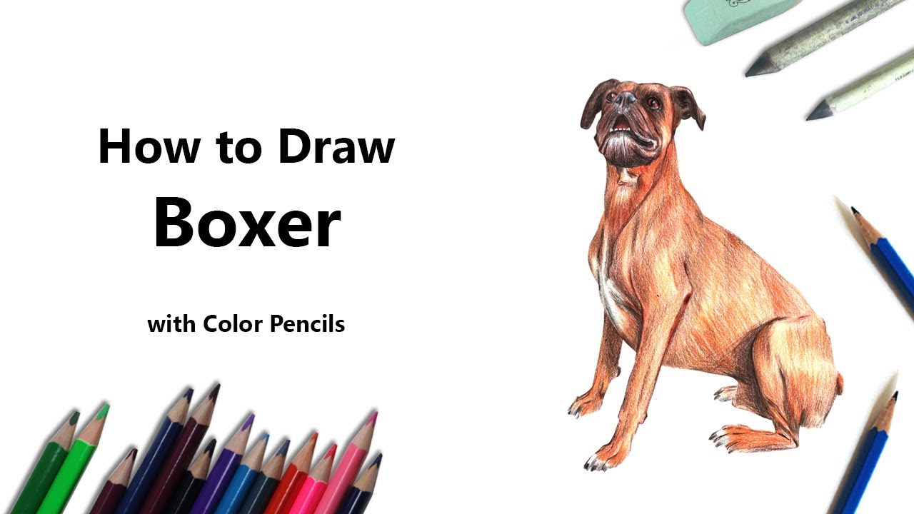How To Draw A Boxer Dog Step By Step Youtube