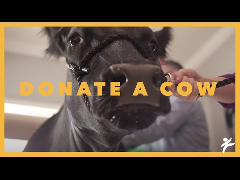 Ship That Cow - Compassion International