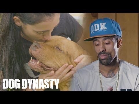 Goodbye Maia: The OG Pitbull Who Started DDK9's | DOG DYNASTY