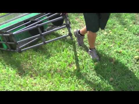 Pick Up Black Walnuts with Baganut Nut Harvester- OLD STYLE