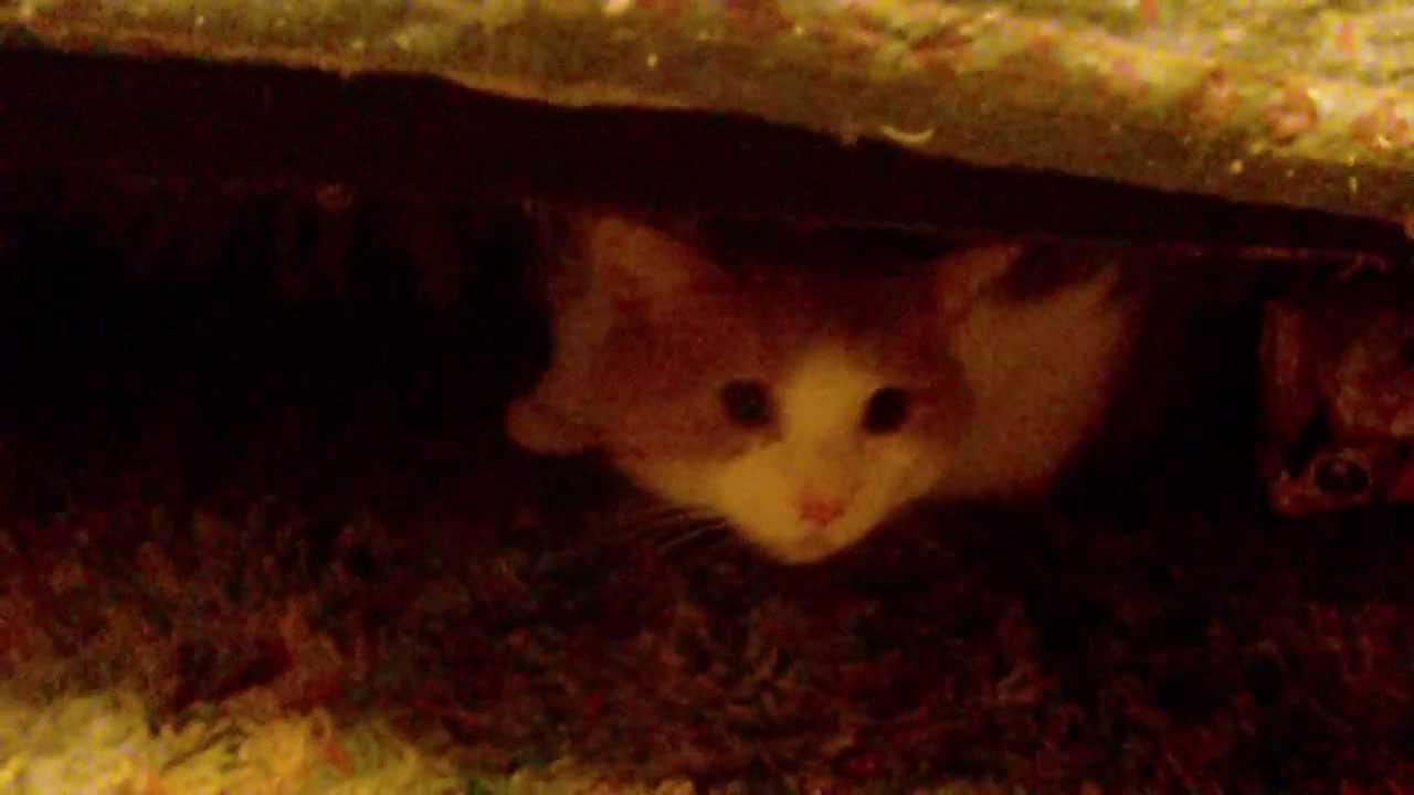 kitten vomited food