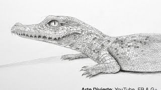 Cómo dibujar un cocodrilo bebé