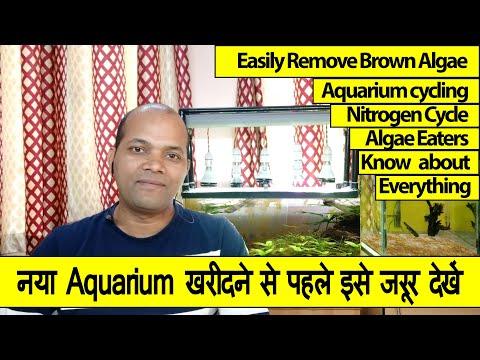 Remove Brown Algae Naturally (Hindi) | Avreus Aquatics | Part 3