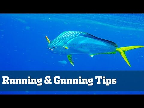 Running and Gunning for Dolphin Tips - Florida Sport Fishing TV