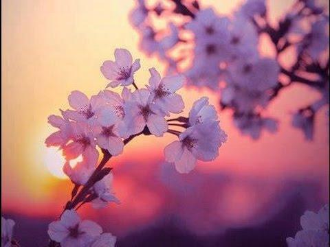Musica Rilassante di Giardini Giapponesi, Musica di Primavera per Pensiero Positivo