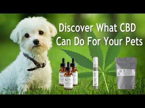cbd-oil-for-dogs-cats-pets-animals