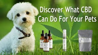 CBD Oil For Dogs Cats Pets Animals