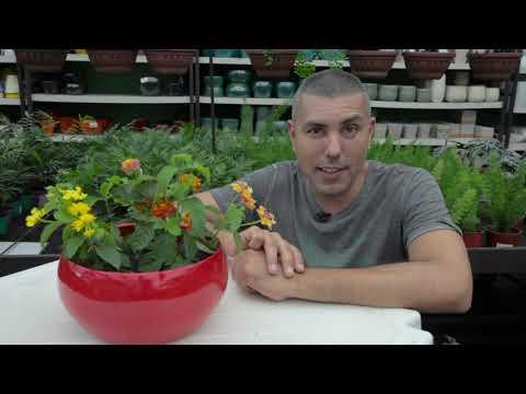 Aprenda como ter flores no jardim o ano todo