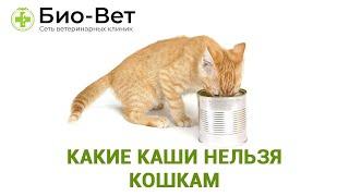 Каши Для Кошек & Какие Каши Нельзя Кошкам. Ветклиника Био-Вет