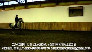 JUMPING HORSES FOR SALE-14.CASSINI I. X ALASKA
