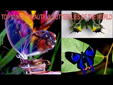 ❤❤❤TOP 10 MOST BEAUTIFUL BUTTERFLIES OF THE WORLD|| Insects Life❤❤❤