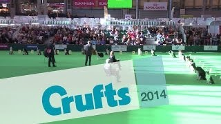 Obedience Dog Championships - Stays | Crufts 2014