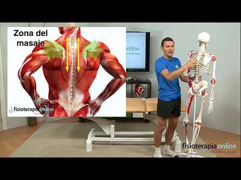 Hombro congelado - Tratamiento con ejercicios, automasajes y estiramiento en Fisioterapia Logroo