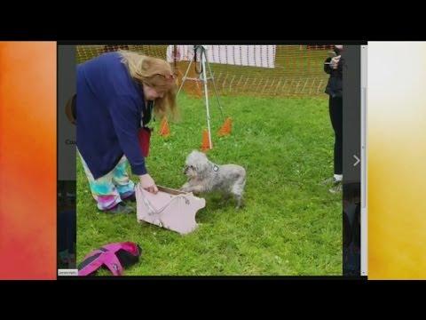Show & Tell: Doggy Dash