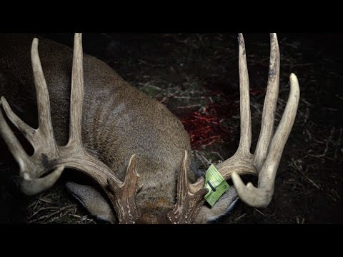 Bowhunting A 170 Inch Kansas Giant