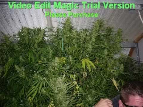Mendocino County: Medical Marijuana Capital of the USA
