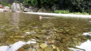 クアトロは泳ぐのが大好き! 秋川渓谷で遊んだよ!