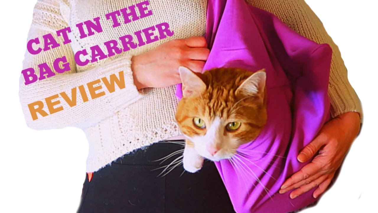 Does The Cat In Bag Carrier Work My Cats Review