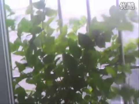Pakistan won landslides and mudslides life 63 100 809 Guangdong noon news