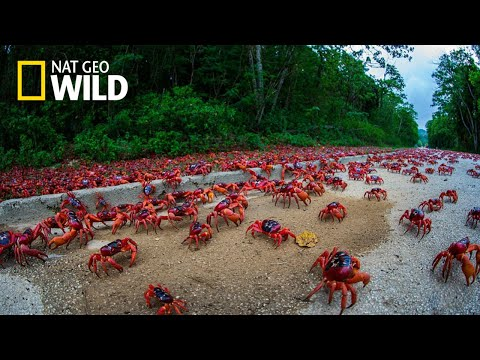 National Geographic Documentary Wild - Wild islands Caribbean - BBC Documentary History