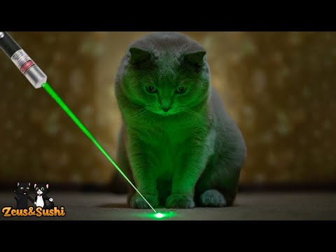 Funny Cats Vs Laser | Cats Chasing A Laser
