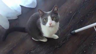 Котэ Валера часть 1(приколы про кота  2016)(Моя история-это серия мини фильмов обо мне и все что меня окружает. В этом видео: кот по имени Валера)и его..., 2015-12-20T12:12:09.000Z)