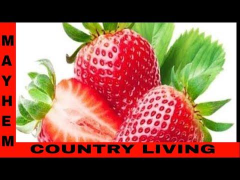 Planting whole strawberries - 동영상