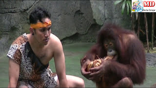 Video Pertunjukan Drama Panggung Aneka Satwa Langka Taman Safari Indonesia II Prigen Pasuruan download MP3, 3GP, MP4, WEBM, AVI, FLV November 2018