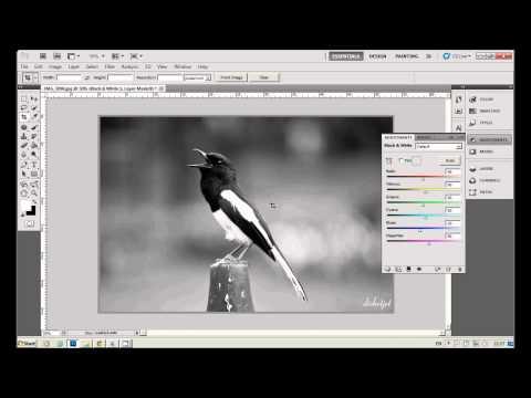 EP.2 สอน Photoshop CS5 : ทำภาพสีให้เป็นภาพขาว-ดำ