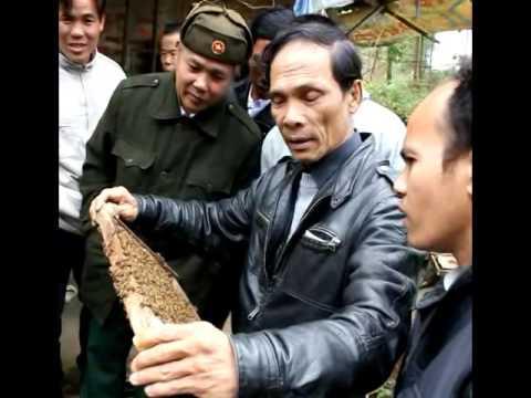 Đại Học Nông Lâm Huế - Nuôi Ong Mật Ở Vùng Đồi Núi Miền Trung Việt Nam