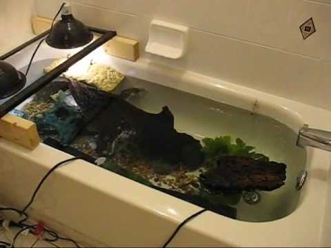 Res Turtles In The Bathtub Youtube