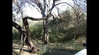 Paseo por el Bosque por Paso Viejo en Córdoba Argentina