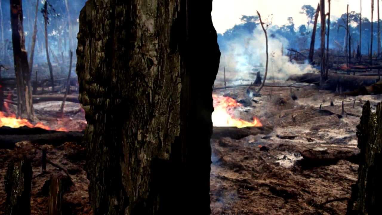 wwf rainforest  deforestation effects