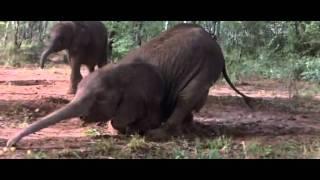 Животный мир. Пьянящее дерево в Африке.