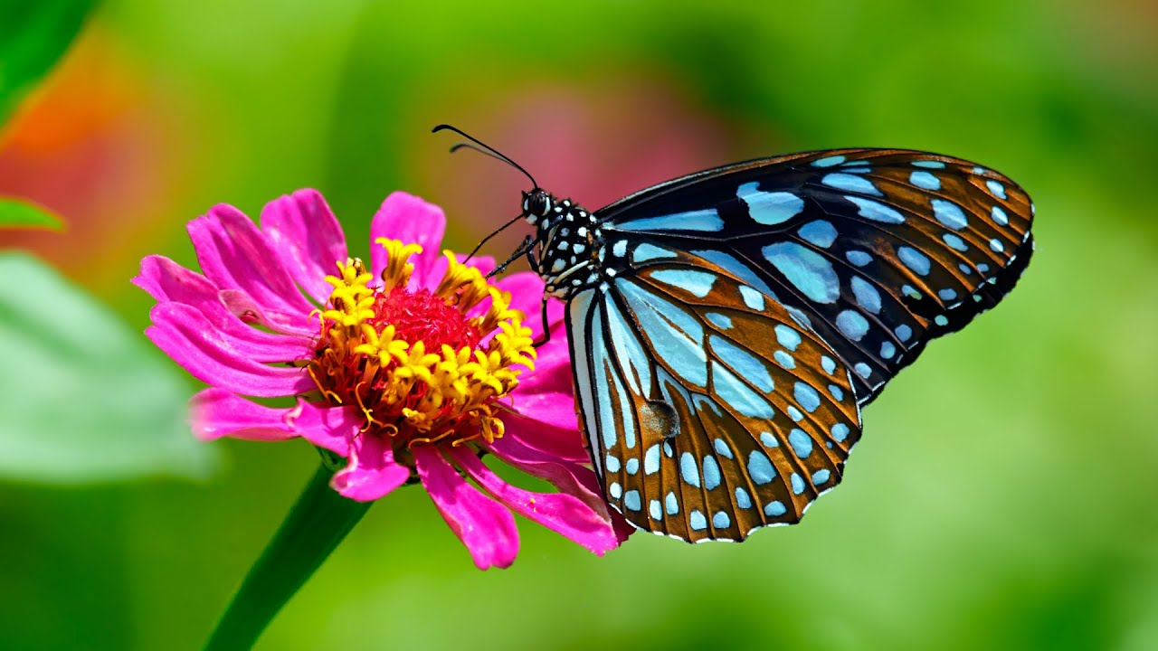 5 Things You Didn't Know About Butterflies - YouTube