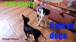 CAT JOKES # Cats vs dogs