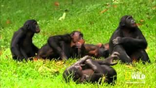 <b>обезьяны</b> трахаются