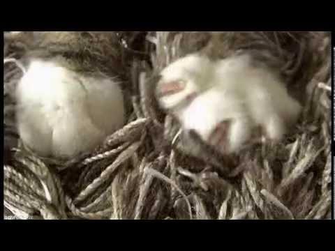 Коты-Воители: Четыре Дерева • Сайт