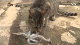 Octopus vs cat. Осьминог напал на кота