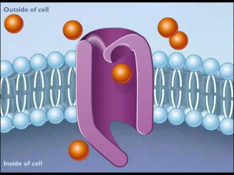 How Facilitated Diffusion Works [HD Animation] (+playlist)